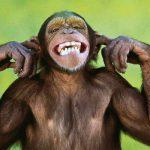 Black People Acting Like Monkeys in H&M Store